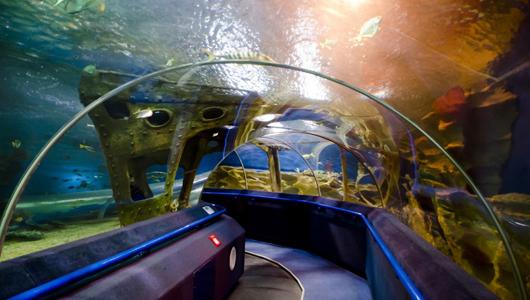 В океанариуме представлено более 4,5 тысяч экземпляров рыб и водных беспозвоночных, относящихся почти к 150 видам
