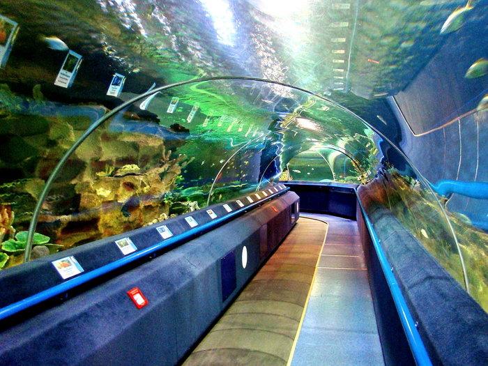 Посетите океанариум обязательно, если вы приехали в петербург и давно не были на море!+видео и фото